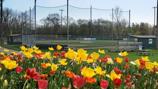 Photo: WMLL ball field behind a field of flowers